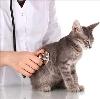 Ветеринарные клиники в Лебяжьем